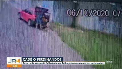 Aposentada tem bezerro de estimação furtado em Palhoça
