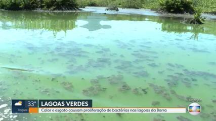 Lagoas da Barra estão com coloração esverdeada por conta de proliferação de algas