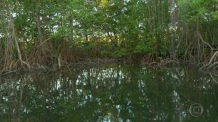 Ambientalistas enfrentam ameaça aos manguezais no Rio Grande do Norte