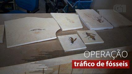 Veja alguns dos fósseis apreendidos em operação da Polícia Federal