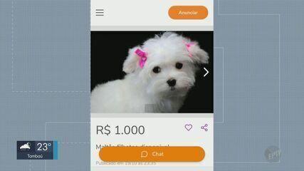 Nome de Canil de Araraquara é usado para golpe de venda de cachorros pela internet