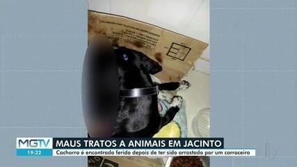 Homem é indiciado após arrastar cachorro por sete quilômetros em Jacinto