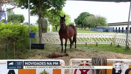 Cavalaria da PM ganha reforço