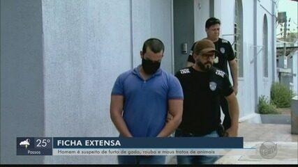 Suspeito de maus-tratos a porco e mais crimes é preso pela polícia de Passos