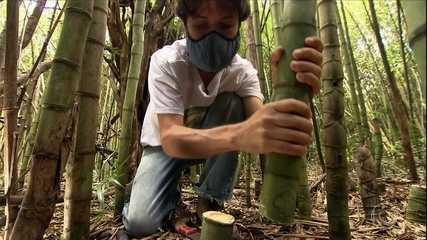 Conheça a versatilidade do bambu