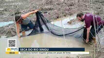 Em Altamira, iniciativa de comunidadese voluntários ajudam a resgatar peixes do rio Xingu