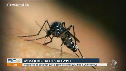 Candidatos e candidatas à Prefeitura de Salvador comentam desafios para combater a dengue