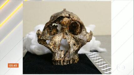 Fóssil encontrado na África do Sul pode elucidar mais um pedaço da história da evolução humana