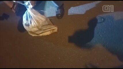 Cachorro é resgatado de dentro de bueiro em Guararapes