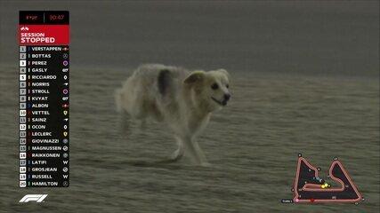 Ih cachorro na pista! Animal invade o treino livre do GP do Barein