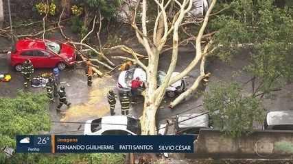 Mulher morre atingida por árvore que estava dentro de escola em São Paulo