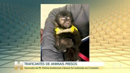 PF de SP faz operação contra tráfico de animais silvestres