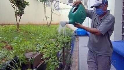 Horta sustentável beneficia pacientes de hospital em Bauru