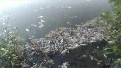 Moradores registram mortandade de peixes em lagoa de Cândido Mota