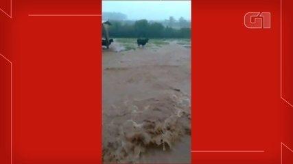 Chuva provoca alagamento, mata animais e revolta dono de sítio em Dois Córregos