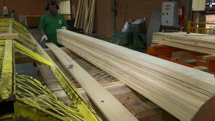 Para onde vai a madeira produzida no Paraná