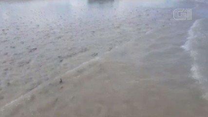 Milhares de 'bolachas-do-mar' aparecem em Ilha Comprida, SP