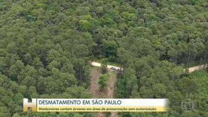 Ministério Público investiga ação de madeireiras em São Bernardo do Campo, SP
