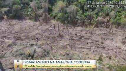 Desmatamento na Amazônia aumentou em janeiro, segundo Imazon