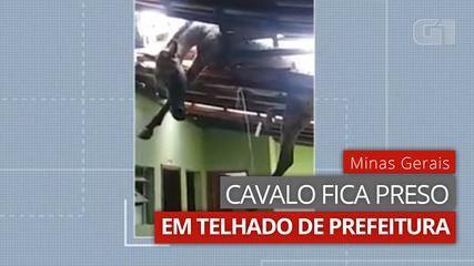 VÍDEO: Cavalo fica preso em telhado de prefeitura em MG
