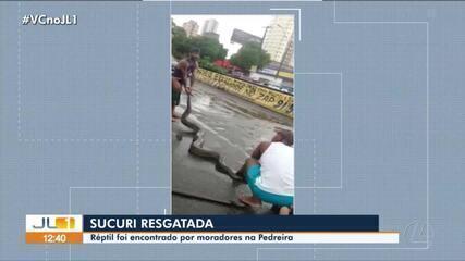Sucuri é capturada por moradores no bairro da Pedreira