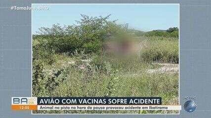 Avião carregado de doses da vacina contra a Covid-19 atinge animal em pista no oeste da BA