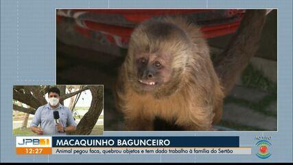 Macaco entra em casa, pega faca, quebra objetos e causa transtornos a família na Paraíba