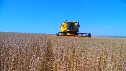 Produtores iniciam colheita da safra de soja no centro-oeste paulista