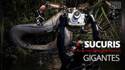 Sucuris gigantes são flagradas durante expedições de fotógrafos subaquáticos em rios do MS