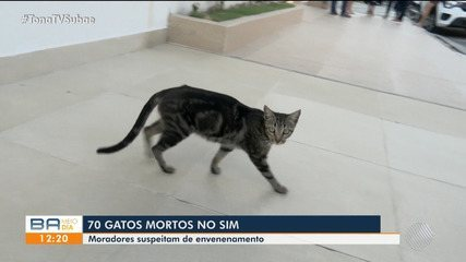 Cerca de 70 gatos são encontrados mortos no bairro Sim neste ano