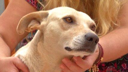 Cadela desaparecida é reencontrada por família após três anos