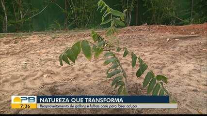 Biólogo reutiliza galhos e folhas que caem de árvores para fazer adubo, em Campina Grande