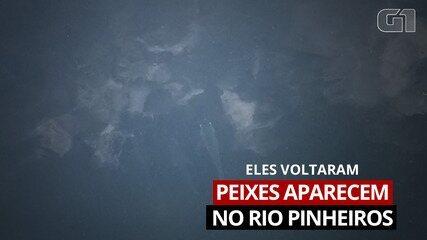 Drone mostra trecho do Rio Pinheiros em que foram encontrados peixes