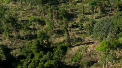 Em março, Amazônia registra a maior taxa de desmatamento para o mês em 10% anos