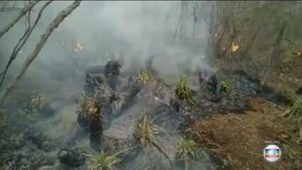 Brasil deve se comprometer em zerar o desmatamento ilegal até 2030 na Cúpula do Clima