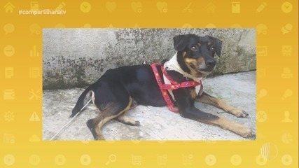 O resgate e a adoção de animais pelo Grupo Fera