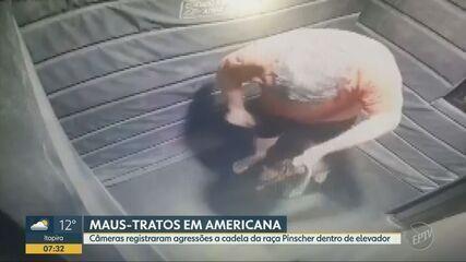 Câmera de elevador flagra maus-tratos a cachorro em condomínio de Americana