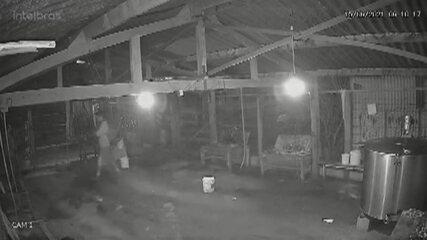 Vídeo mostra o suspeito de matar família escondido em galpão de chácara
