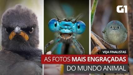 Veja fotos finalistas de concurso que premia cliques mais engraçadas de animais selvagens