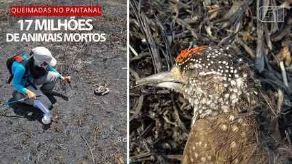 Extermínio no Pantanal: 17 milhões de animais morreram nas queimadas em 2020, diz estudo