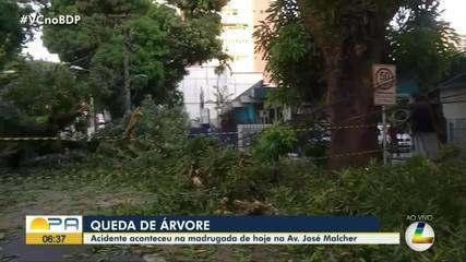 Árvore cai e trânsito fica bloqueado na avenida Governador José Malcher, em Belém