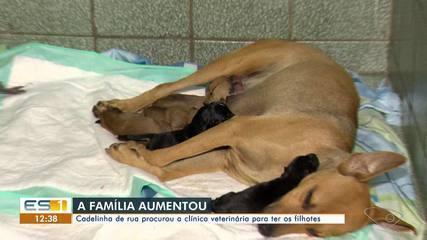 Cadelinha de rua 'procurou' clínica veterinária para ter os filhotes