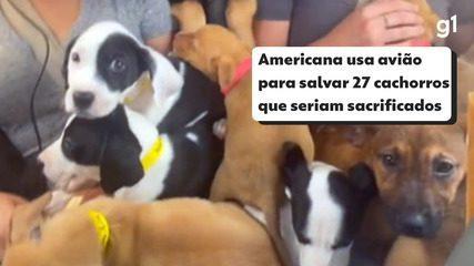 Americana fretou um pequeno avião para resgatar 27 cachorros