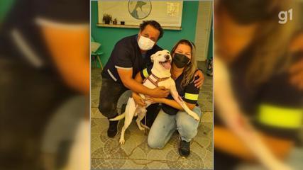 Cão que teve pata amputada ao ser espancado e esfaqueado é adotado em Araçoiaba da Serra