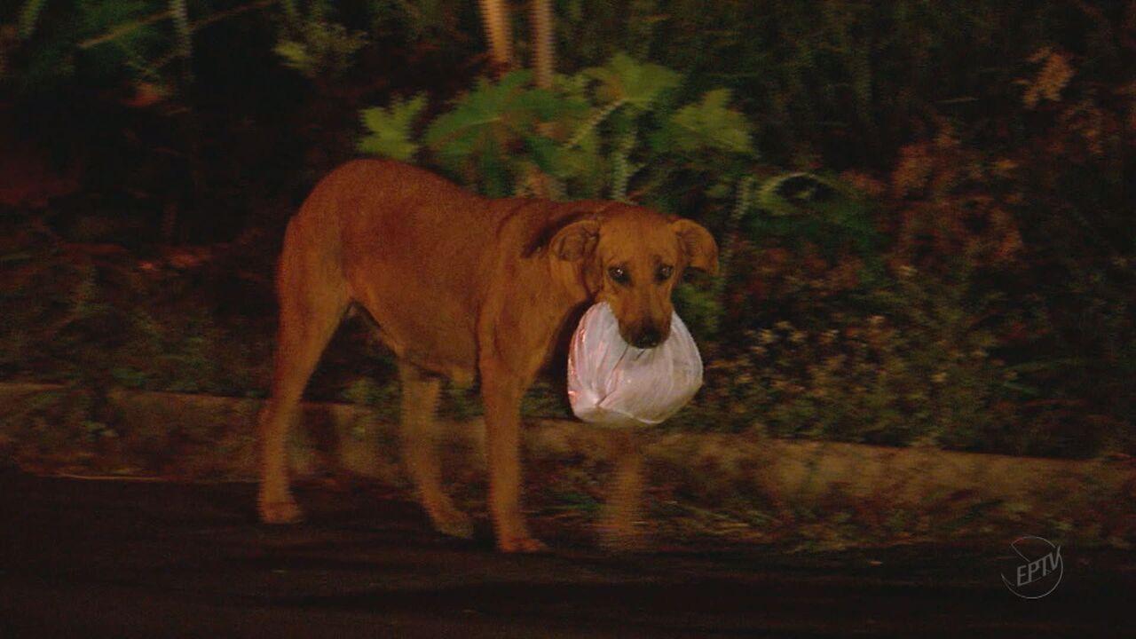 Cadela Lilica enfrenta perigos da rodovia para alimentar outros animais
