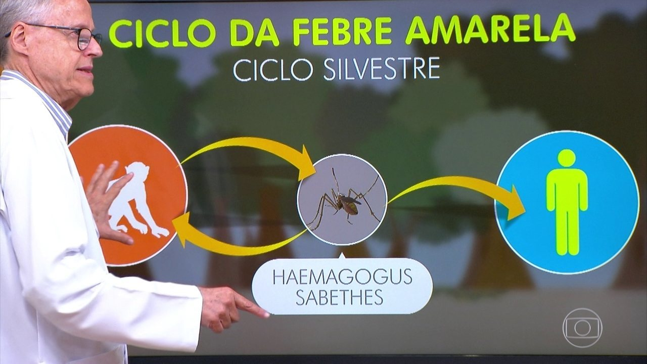 Médico explica a diferença entre a febre amarela silvestre e a urbana