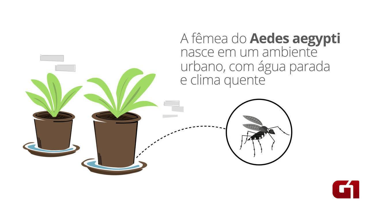 Entenda o ciclo de transmissão da zika, chikungunya e dengue