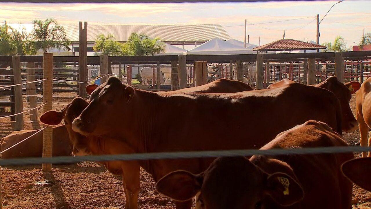 Começa nesta terça (16) a AgroBrasília, com muitas novidades para o setor do agronegócio