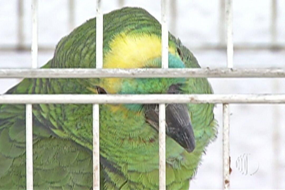 Polícia Ambiental evita envio de animais silvestres do Alto Tietê para Minas Gerais