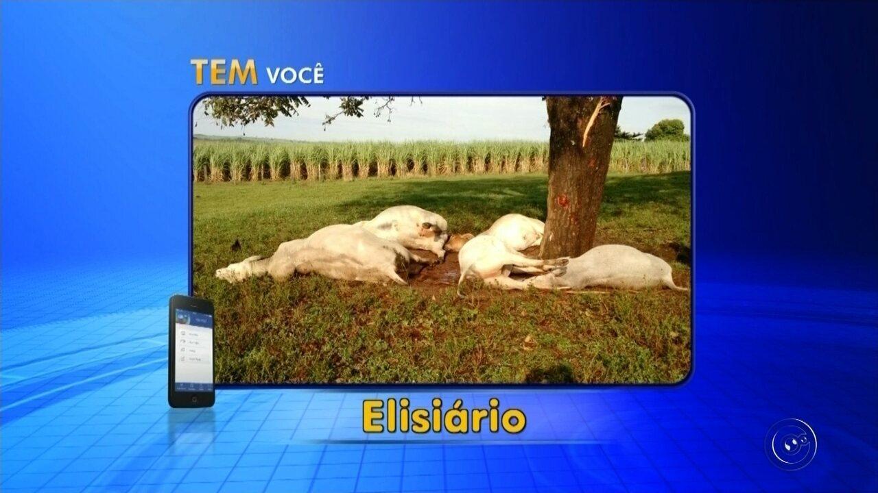 Raio mata gado e fazendeiro calcula prejuízo de R$ 30 mil em Elisiário